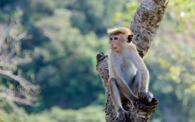 Top 10 Reasons to Visit Sri Lanka